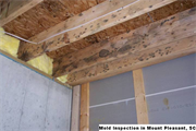 Mold Inspection in Mount Pleasant, SC