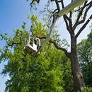 Tree Service Cary