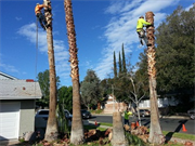 Evergreen Tree service & Landscaping Pro