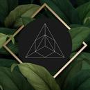 Enhanced Brand & Web Design